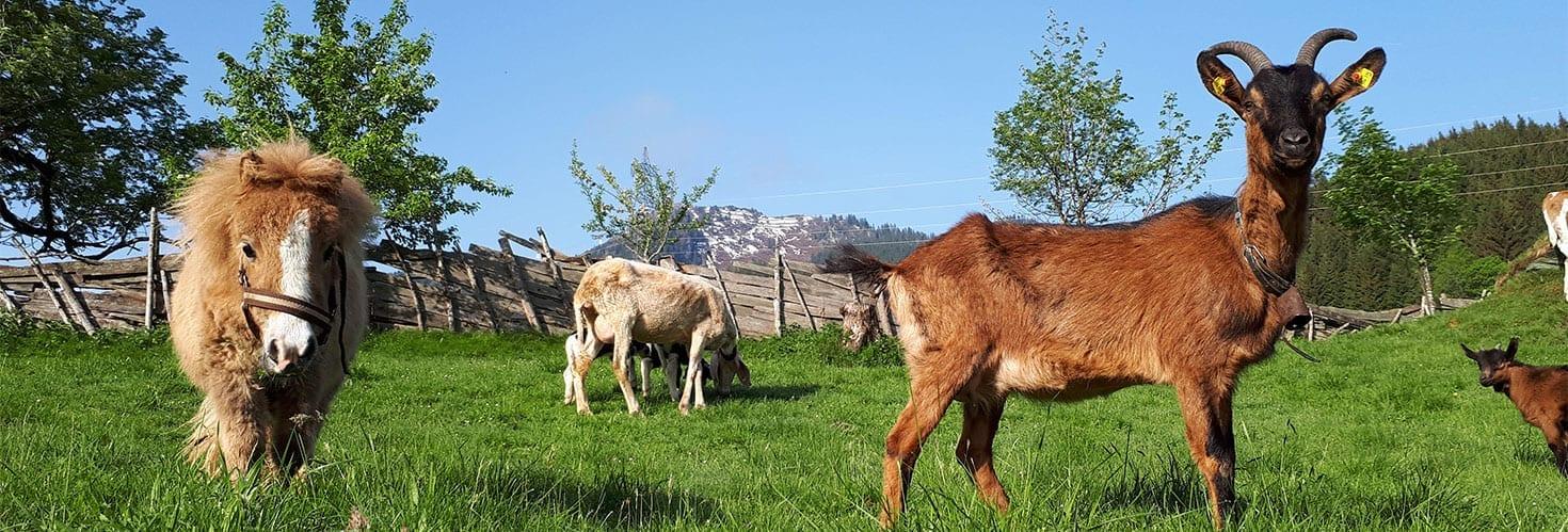 Tiere - Urlaub am Bauernhof im Gasteinertal, Maurachgut