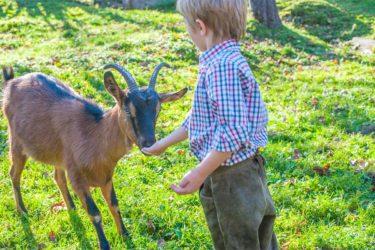 Leben mit den Tieren - Biobauernhof Maurachgut in Bad Hofgastein